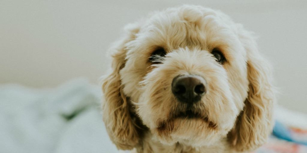 a cute puppy - why you should not you use a pros and cons to consider getting a dog