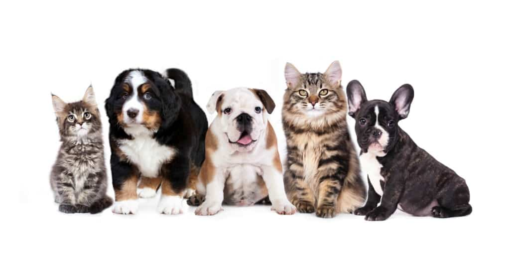 Group of dogs and cats sitting in front of a white background