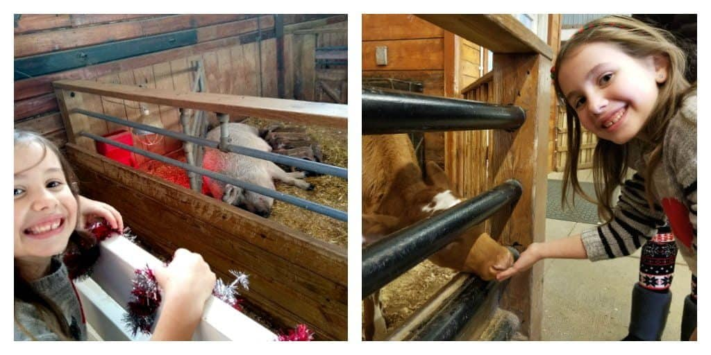 inspiring money story Faith - at an animal petting farm