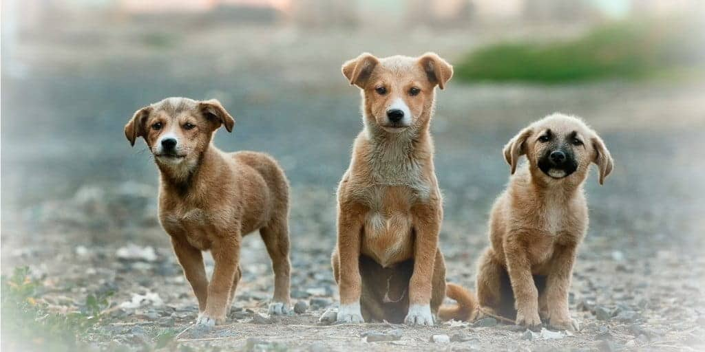 three-pet-dogs-outside