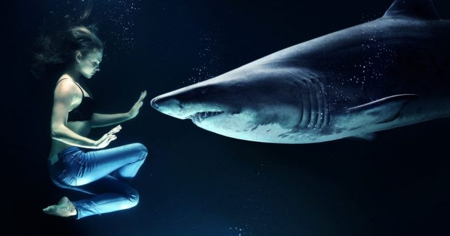 shark and woman face to face in the water
