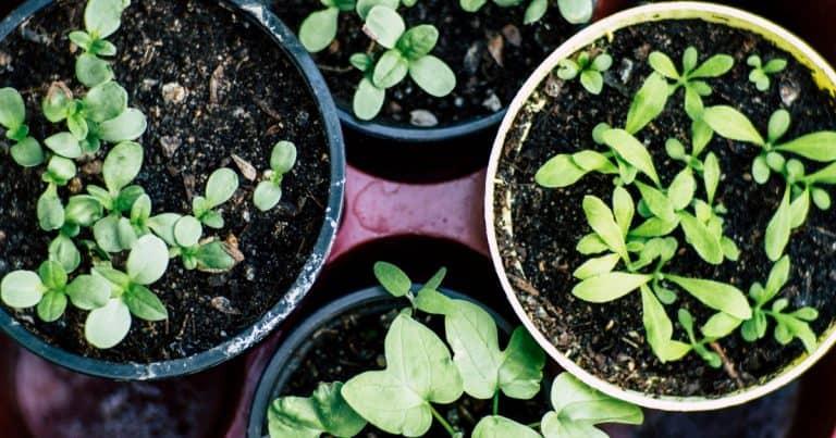 How Do I Start an Affordable Home Garden?